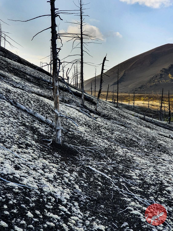 Мертвый лес, Камчатка